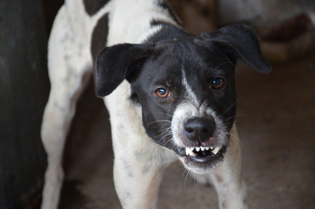 South Carolina Dog Bite Injuries